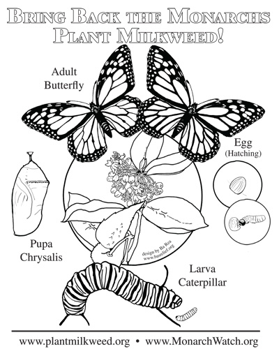 Plant Milkweed Simple Coloring page