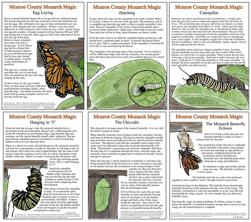 Monarch Life Cycle Posters