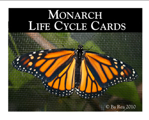 Monarch Life Cycle Cards
